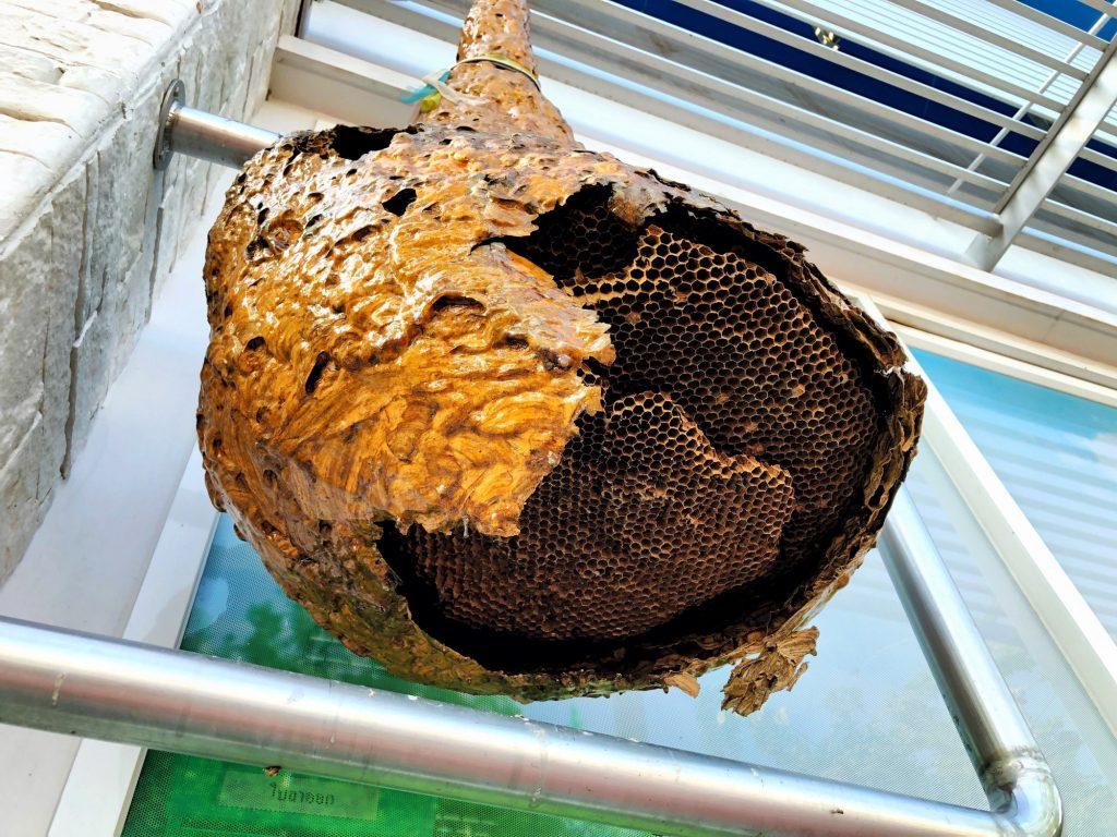 L'assurance habitation prend-elle en charge l'extraction des nids de guêpes ?